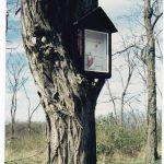 Képes fa, Köbölkút [Gbelce]